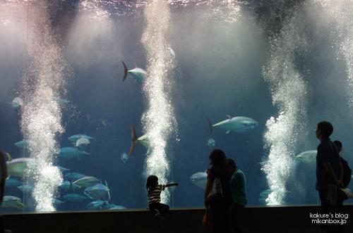 葛西臨海水族園 マグロ水槽